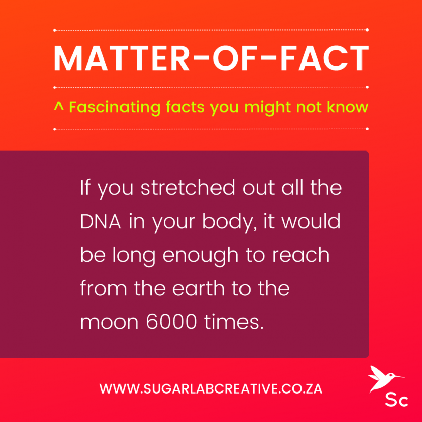 SugarLab Creative - Matter-of-Fact